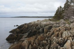 Norse Cove -2