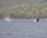 NL Whales (5 of 9)